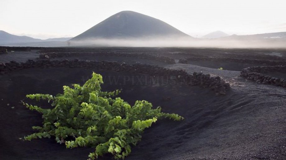The volcanic island of Lanzarote vineyards