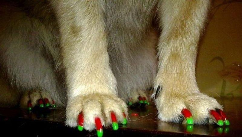 Glamour Doggy