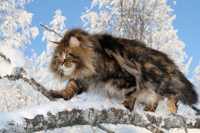 Animals and plants | baikalsp.ru