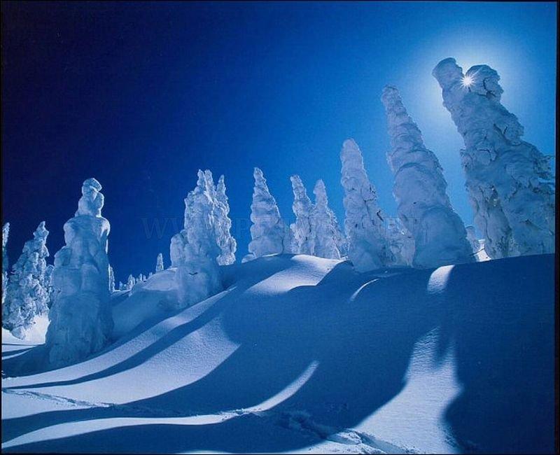 Snow Monsters in Japan