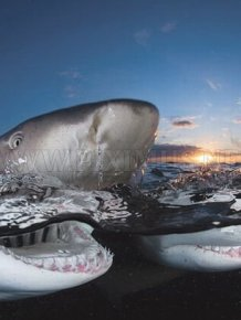 Sharks Up Close
