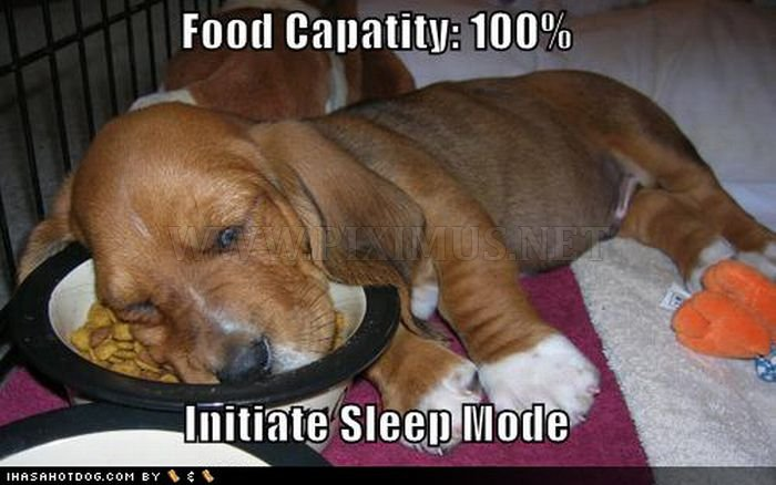 Cute Dogs Falling Asleep by Their Bowls