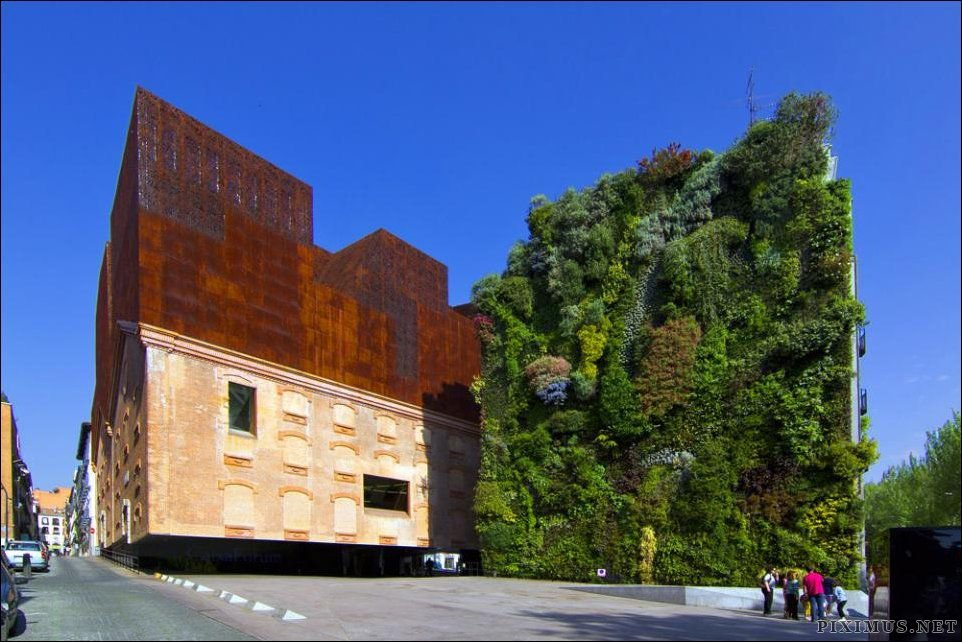 Beautiful Living Wall