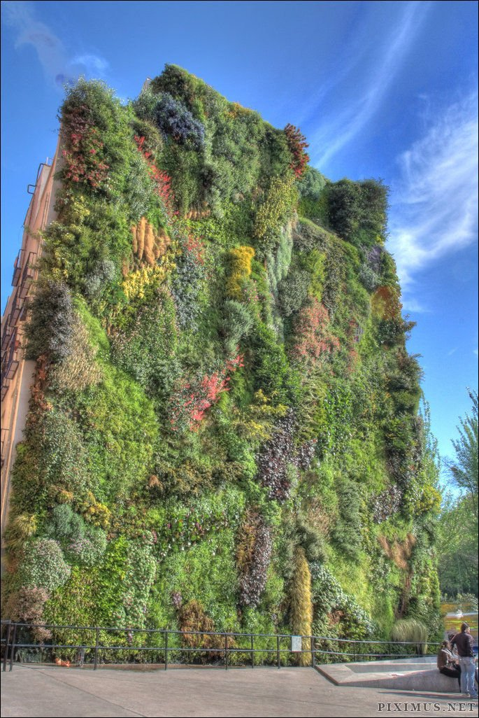 Beautiful Living Wall