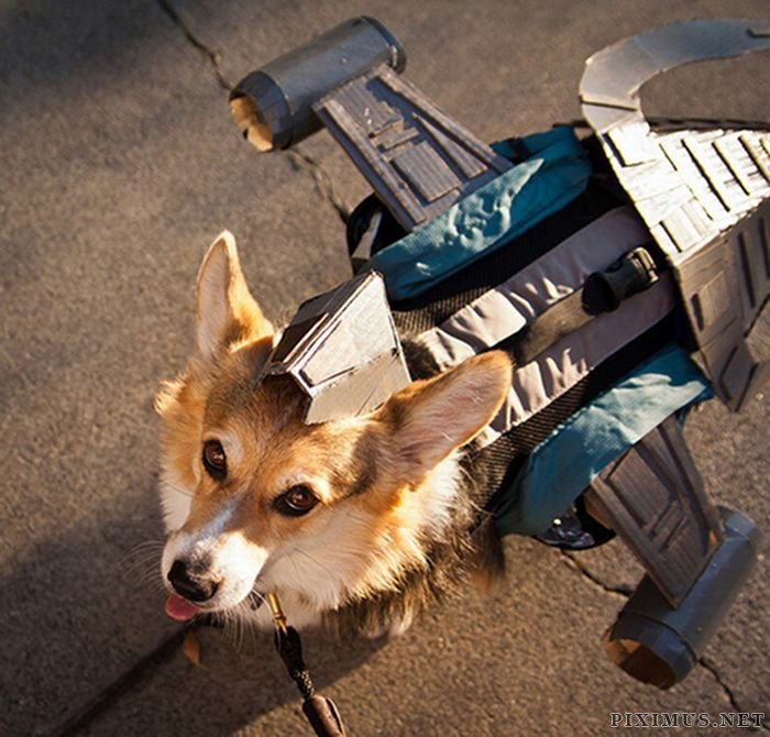 Incredible Dog Costumes Inspired by the Movies