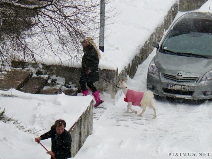 Unusual Pet in Pink