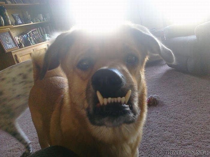 Special Dog Murray