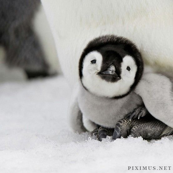 The Cutest Animal Pictures Ever