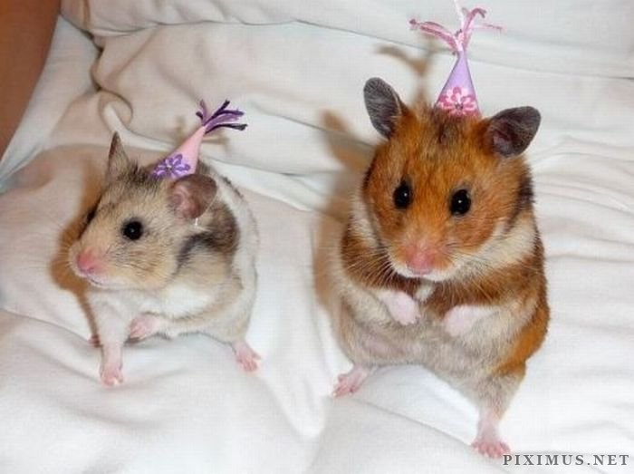 Animals wearing hats
