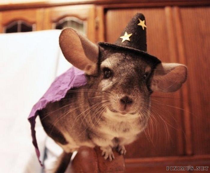 Animals wearing hats