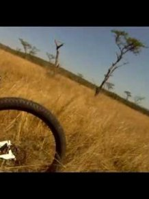 Mountain Biker gets taken out by antelope