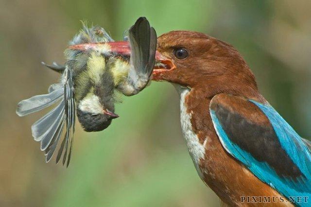 Birds Photography