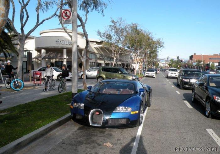 Dog In Bugatti Veyron Vehicles