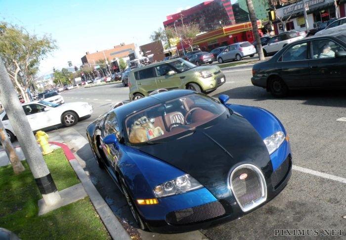 Dog in Bugatti Veyron