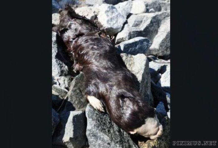 Strange Animal Found in Canada