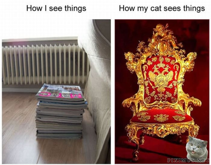 How My Cat Sees Things