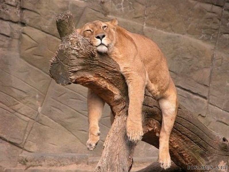 Adorable Exhaustion