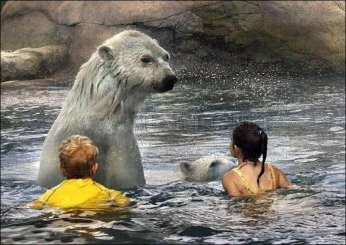 Kids Swimming with Polar Bears