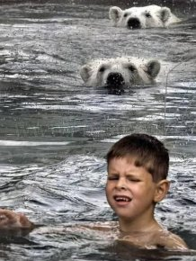 Kids Swimming with Polar Bears