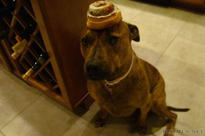 Food on My Dog