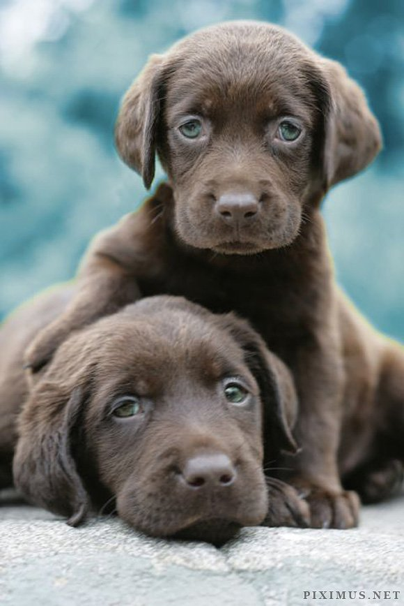 Cute Puppies, part 2