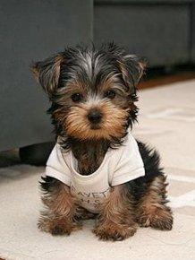 Cute Puppies