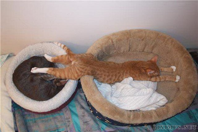 Cats Sleeping In Weird Ways