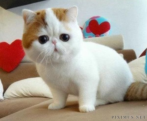 Very Cute Cat Taking Bath