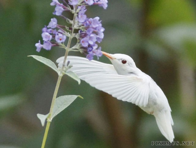 Great Pictures of Albino Animals