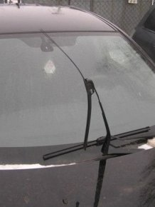 Stray Dogs Ruin the Car with Their Teeth