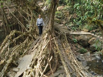 Incredible Tangled Root Bridges
