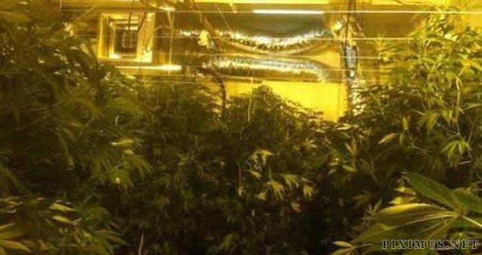 Marijuana Plantation in Bronx