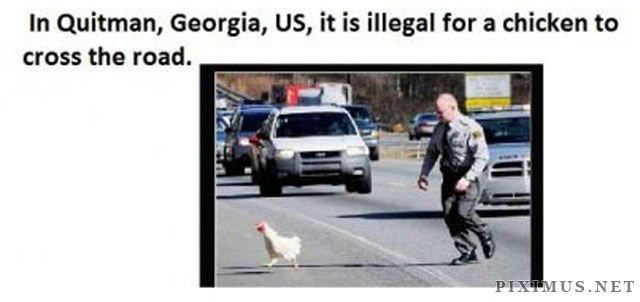 Bizarre Actual Laws