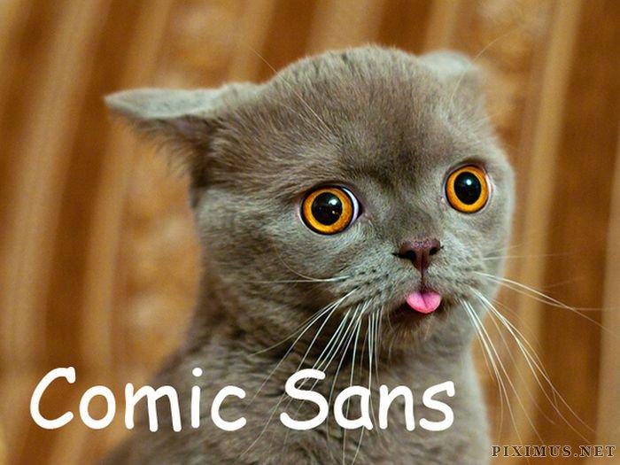 Сats As Fonts