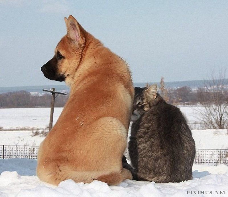 Dog and Cat - Best Friends