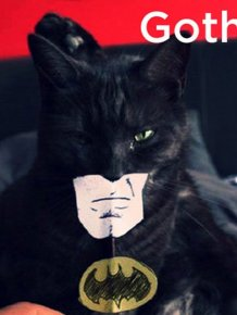 Cats That Must Have Inspired Popular Fonts