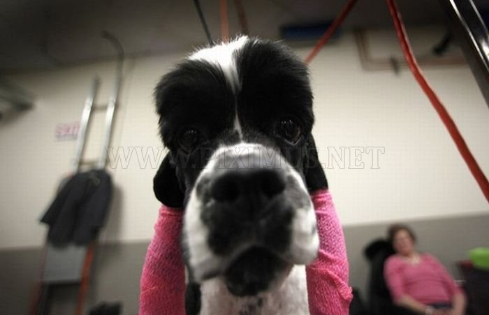 Backstage At The 135th Annual Westminster Dog Show