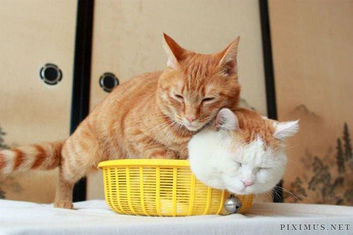Two Kitties In A Basket