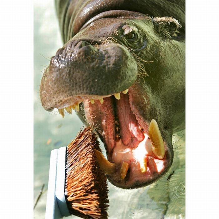 Animals at the Dentist