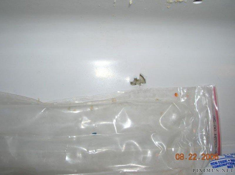 Crazy Stray Bullet Photos from Kansas
