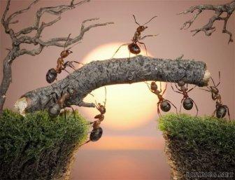 Ant Stories