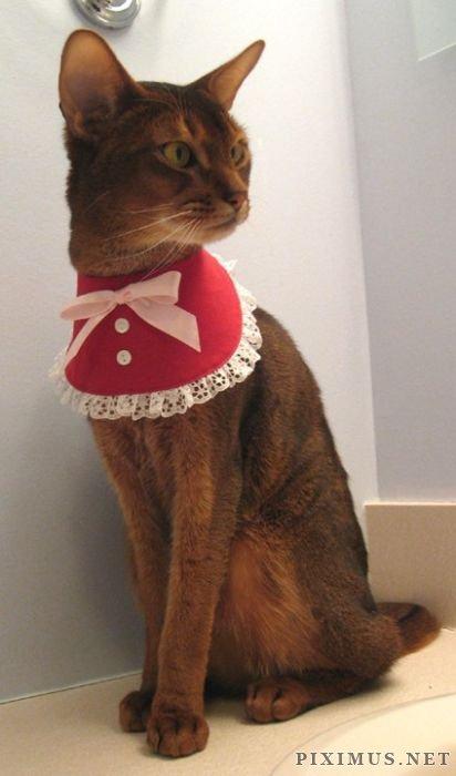 Cat Fashion