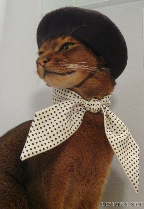 Cat Fashion