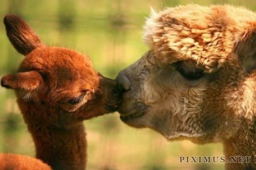 Cute Animals, part 6