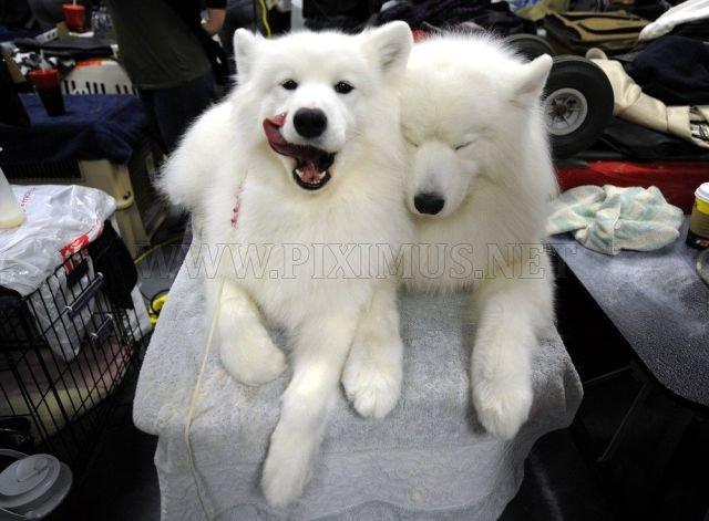 Cute Animals, part 3