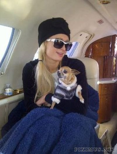 Paris Hilton Twitpics
