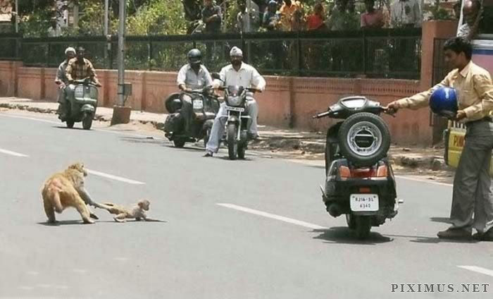 Only in India , part 2