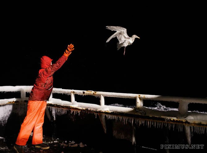 Fish-Work In Bering Sea by Corey Arnold