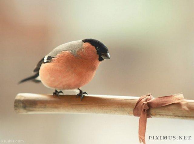 Bird Photography, part 2