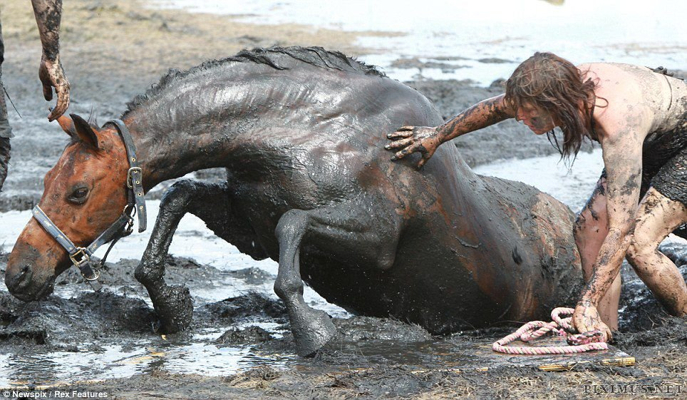 Woman and Her Horse saved from the Quagmire
